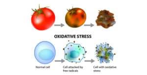 Oxidativer Stress