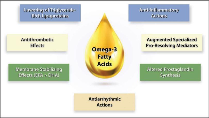 Bedeutung von Omega 3 im Bodybuilding
