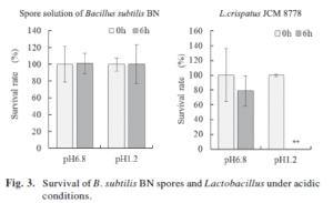 Bacillus Subtilis Magensäure