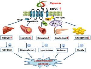 Capsaicin und kardiometabolische Effekte