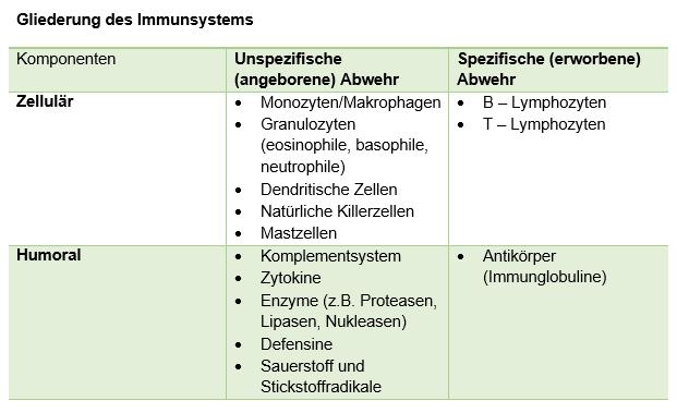Das ist unser Immunsystem