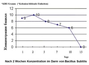 Bacillus Subtilis siedelt sich im Darm an