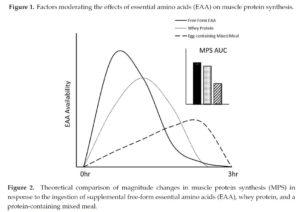 EAA, Wheyprotein und Proteinmahlzeit