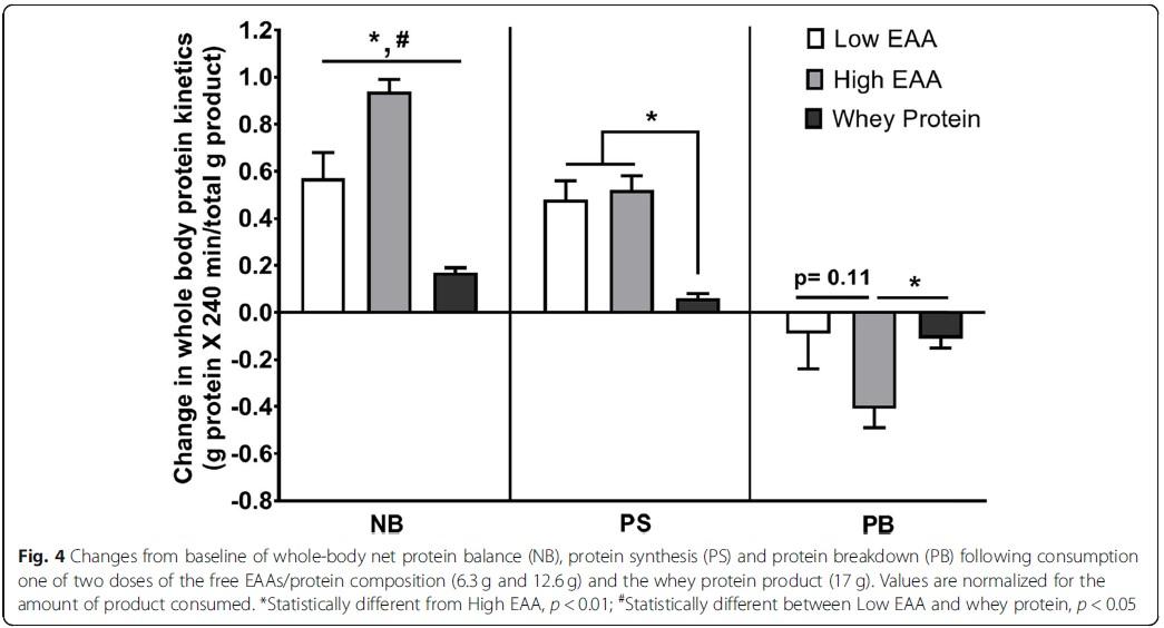 EAA plus Protein für besseren Proteinturnover