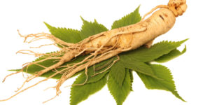 Panax Ginseng in HBN Mental Boost