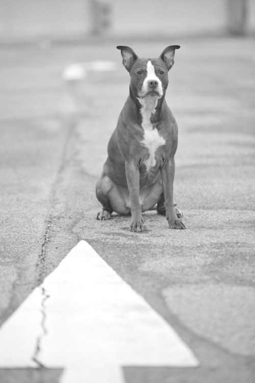Hunde und Bewegung