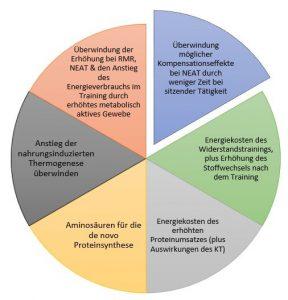 Variablen des Kalorienbedarf bei Muskelaufbau