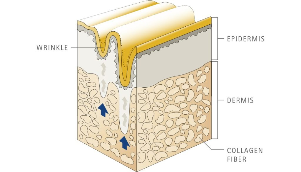 Kollagen Haut