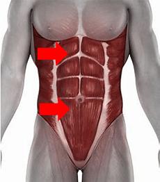Mittlere und untere Bauchmuskeln