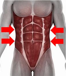 Seitliche Bauchmuskeln